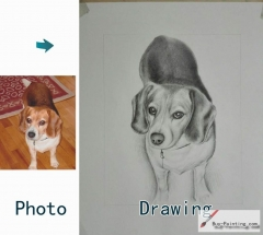 Custom Drawing-The lovely dog