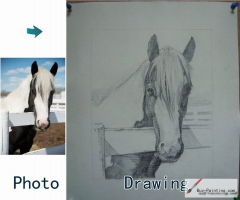 Custom Drawing-A horse in a fence