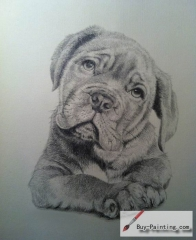 Custom Pencil Drawing-A thoughtful dog