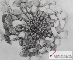 Custom Drawing-Passion flowers